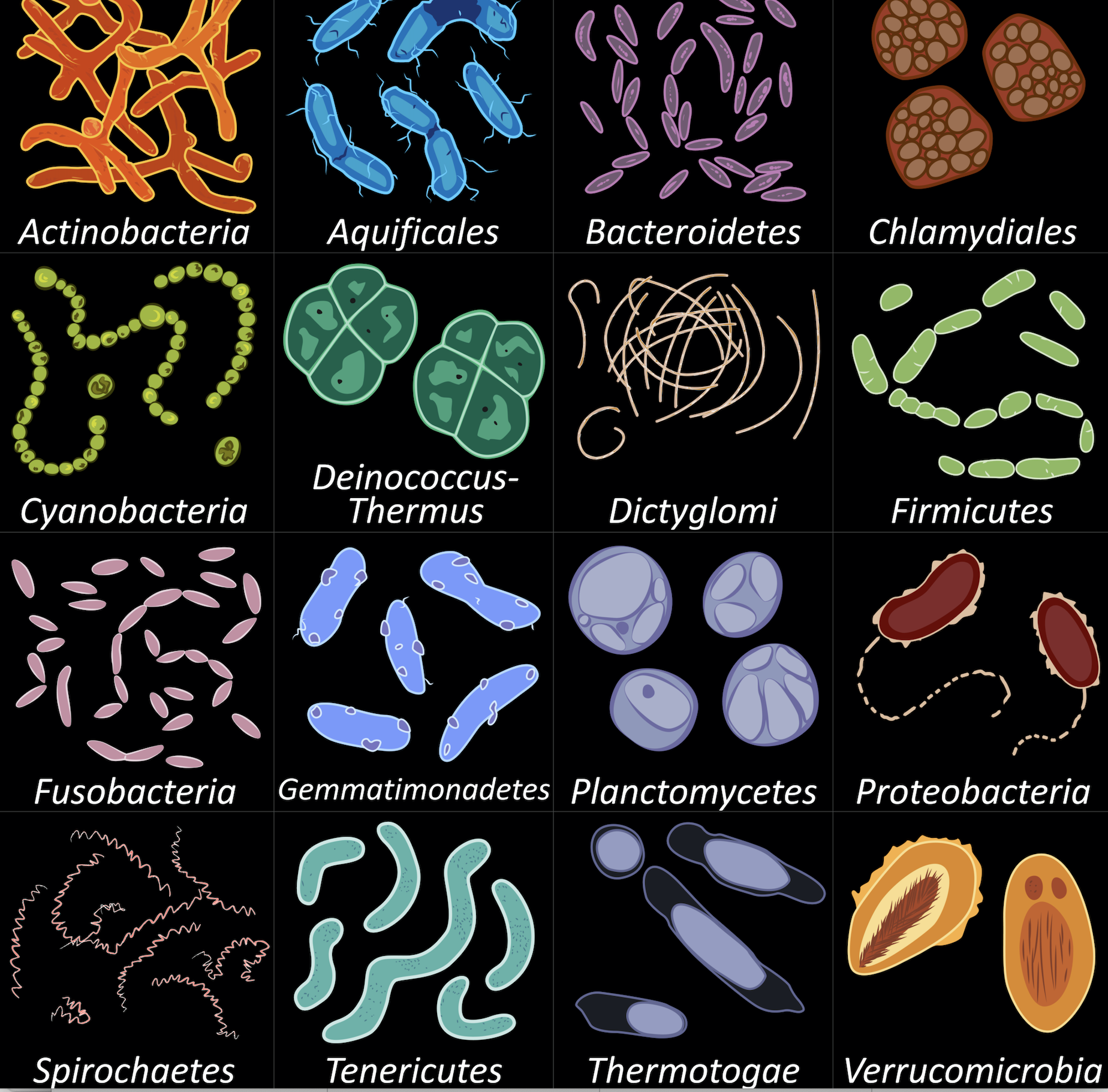Microbiome profiling (16S rRNA gene sequencing)